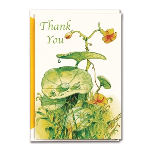 Thank You Nasturtium